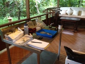 My temporary lab courtesy of Lembeh Resort!
